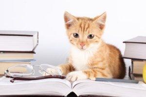 Gato lendo